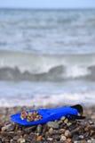 Nageoire avec le seashell sur la plage pierreuse image stock
