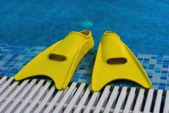 Nageoires jaunes sur la côte du commutateur Photo stock