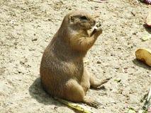 Nagetier am Zoo in Zagreb lizenzfreie stockfotos