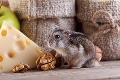 Nagetierhimmel - Hamster oder Maus im Pantry Stockbild