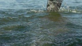 Nageurs d'athlètes changeant la discipline de course de la natation en faire du vélo sur le mouvement lent de rivière clips vidéos