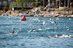 Nageurs de Triathalon Image stock