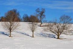 Nagi dębowy drzewo uczy hula trzy innego drzewa w śnieg zakrywającym polu Obraz Stock