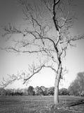 nagi drzewo fotografia stock