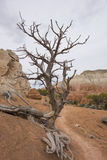 nagi drzewo obraz stock