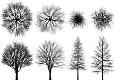 nagi drzewo ilustracja wektor