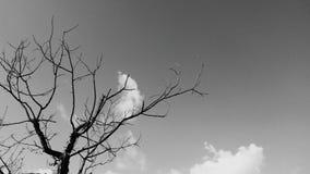 nagi drzewo Obrazy Stock