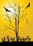 Nagi drzewo i ptak Zdjęcie Royalty Free