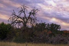 Nagi drzewo & Kolorowy niebo Zdjęcie Royalty Free
