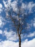 Nagi drzewo na otwartym niebie w zimie Obrazy Stock