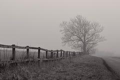 Nagi drzewo w mgiełce Zdjęcia Royalty Free