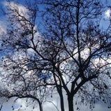 Nagi drzewo z czarnym bursztynem pod jasnym niebieskim niebem obraz royalty free