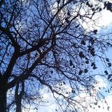 Nagi drzewo z czarnym bursztynem pod jasnym niebieskim niebem obraz stock