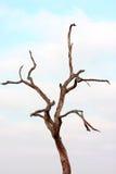 Nagi drzewo zdjęcie royalty free