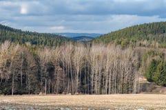 Nagich drzew jesieni zimy wzgórza bezlistny lasowy pole Zdjęcia Royalty Free