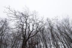 Nagie drzewo korony Obrazy Stock