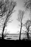 Nagie, nagie drzewo sylwetki na Trasimeno jeziornym brzeg Umbria, Włochy Zdjęcia Royalty Free