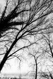 Nagie, nagie drzewo sylwetki na Trasimeno jeziornym brzeg Umbria, Włochy Zdjęcia Stock