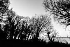 Nagie, nagie drzewo sylwetki na Trasimeno jeziornym brzeg Umbria, Włochy Obraz Stock