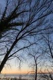 Nagie, nagie drzewo sylwetki przy zmierzchem na Trasimeno jeziornym brzeg Umbria, Włochy Fotografia Royalty Free