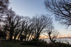 Nagie, nagie drzewo sylwetki przy zmierzchem na Trasimeno jeziornym brzeg Umbria, Włochy Zdjęcie Royalty Free