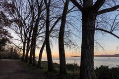 Nagie, nagie drzewo sylwetki przy zmierzchem na Trasimeno jeziornym brzeg Umbria, Włochy Zdjęcia Stock
