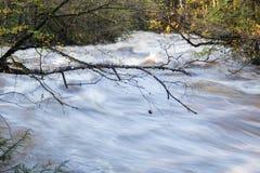Nagie gałąź nad gnanie powodzią nawadniają w Great Smoky Mountains w jesieni Zdjęcie Stock