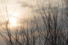 Nagie gałąź przy jutrzenkowym słońcem Zdjęcia Royalty Free