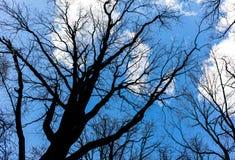 Nagie gałąź treetop na nieba tle w wiośnie Obrazy Royalty Free