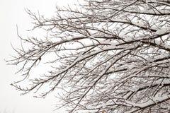 Nagie gałąź z śniegiem Obrazy Royalty Free