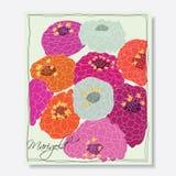 Nagietków kwiaty ilustracji