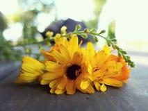 Nagietka Agrimony na stole i kwiaty Obraz Stock