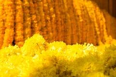 Nagietka kolor żółty kwitnie tło Fotografia Stock