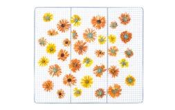Nagietka Organicznie calendula suszone kwiat Obraz Royalty Free