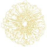 Nagietka wektorowy kwiat. Fotografia Stock