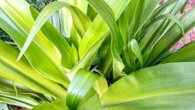 Nagoeeri verde fotografie stock libere da diritti