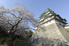 Nagoya Castle and blossoming cherry tree. A tree is in full blossomed splendor, with a Japanese lamp hanging, next to Nagoya's famed castle, Japan Stock Photo