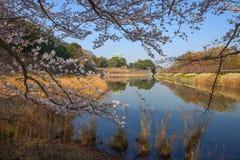 Nagoya Castle. In cherry blossom, in Nagoya, Japan Stock Photo