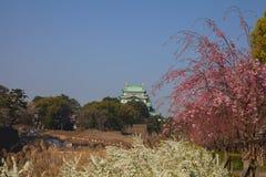 Nagoya Castle. In cherry blossom, in Nagoya, Japan Royalty Free Stock Photo