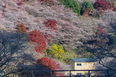 Nagoya, Obara Autumn Landscape com flor de sakura fotografia de stock royalty free