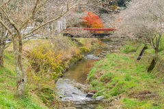 Nagoya, Obara Autumn Landscape con il fiore di sakura fotografie stock