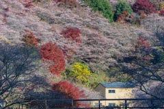 Nagoya Obara Autumn Landscape med den sakura blomningen Royaltyfri Fotografi