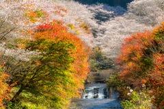 Nagoya, Obara Sakura in autumn Royalty Free Stock Photography