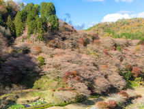 Nagoya, Obara Sakura in autumn Royalty Free Stock Photos