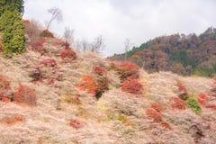 Nagoya, Obara Sakura in autumn Stock Photos