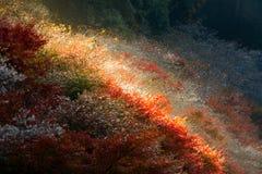 Nagoya, Obara Sakura in autumn Stock Image