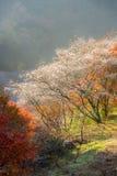 Nagoya, Obara Sakura in de herfst Stock Foto's