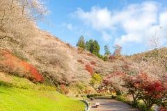 Nagoya Obara Sakura i höst Arkivbilder