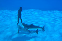nagrywa underwater Fotografia Royalty Free