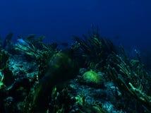Nagryzmolony filefish Fotografia Royalty Free
